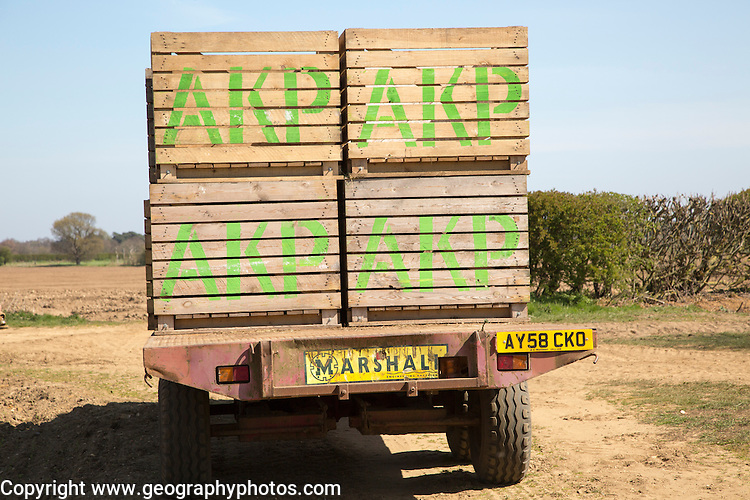 Boxes of seed potatoes on a farm trailer ready to be planted in fields, Sutton, Suffolk, England, UK