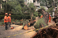 SÃO PAULO,SP, 11.03.2016 - QUEDA-ÁRVORE - Queda de árvore na Rua Rouxinol 214 cruzamento com rua Pintassilgo no bairro de Moema zona sul da cidade na madrugada desta sexta-feira (11). Ninguém se feriu, mas , o trânsito ficou complicado no local. ( Foto : Marcio Ribeiro / Brazil Photo Press)
