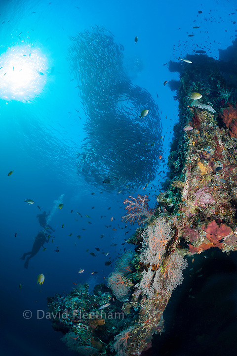 Divers and a school of bigeye jacks, Caranx sexfasciatus, on the Liberty wreck, Tulamben, Bali, Indonesia.