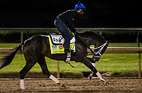 LOUISVILLE, KY - MAY 02: Always Dreaming gallops in preparation for the Kentucky Derby at Churchill Downs on May 02, 2017 in Louisville, Kentucky. (Photo by Alex Evers/Eclipse Sportswire/Getty Images)