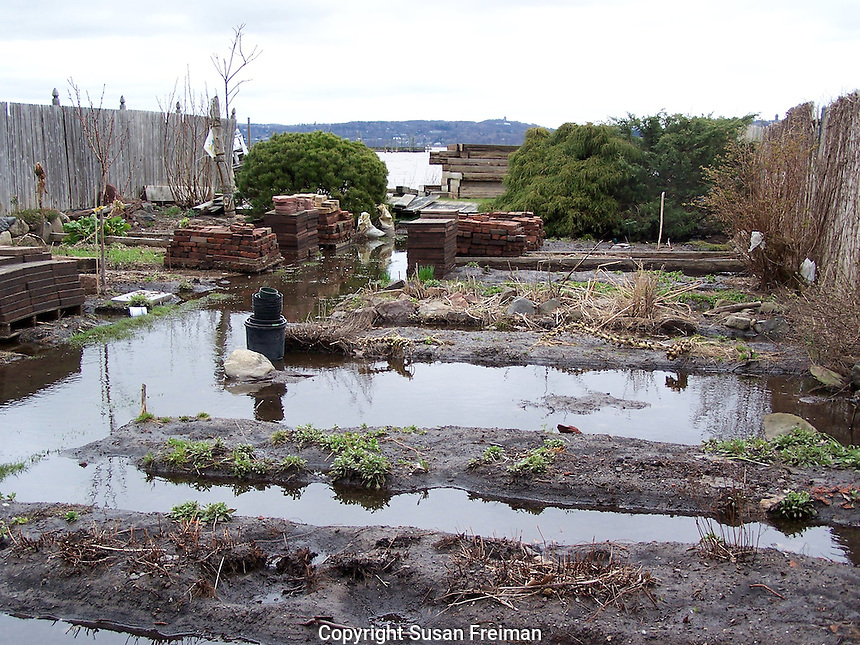 Joan Gussow's garden is demolished, rebuilt and replanted, Spring, 2010.