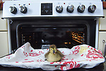 Duckling hatched in oven by Will Hall