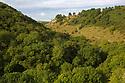 Ash woodland {Fraxinus excelsior} in Lathkill Dale, Peak District National Park, Derbyshire, UK. September.