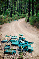 Image Ref: YV194<br /> Location: Toolangi State Forest<br /> Date: 03 Jan 2015