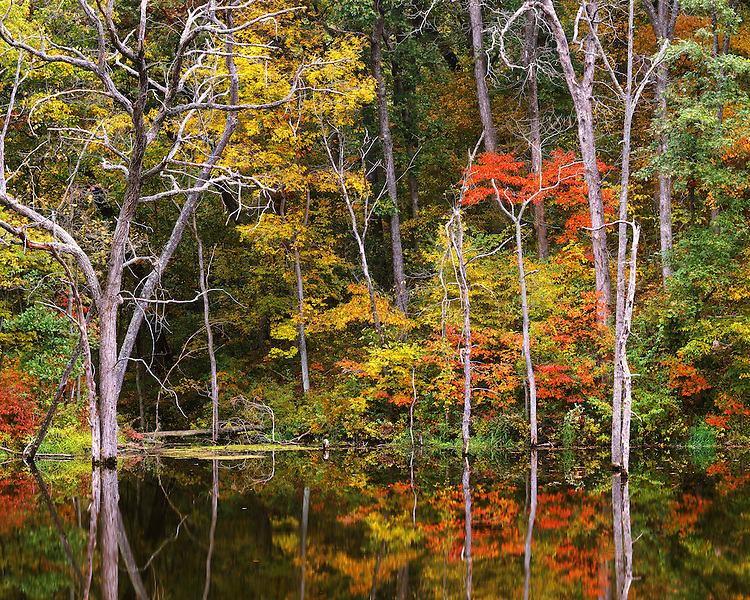 Fall color and tree patterns in Cattail Cove; Siloam Springs State Park, IL