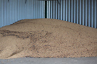 Beans in store<br /> ©Tim Scrivener Photographer 07850 303986<br />      ....Covering Agriculture In The UK....