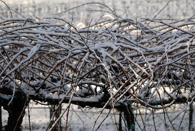 Snow on Spring Mountain vineyard