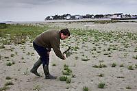 Europe/France/Picardie/80/Somme/Baie de Somme/Le Crotoy: Bramassage dans les prés -salés de la Baie de Somme de la Salicorne par  Mr Devismes  Auto N°:2008-205  N°:2008-206
