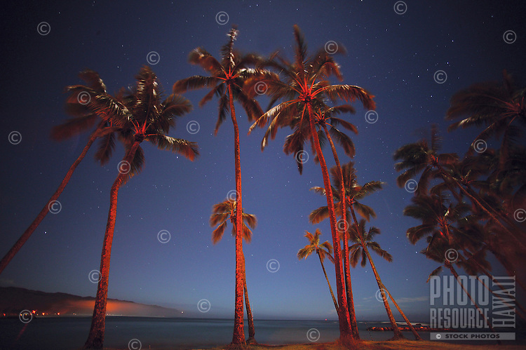 palm trees tower overhead with a blue evening sky in the background