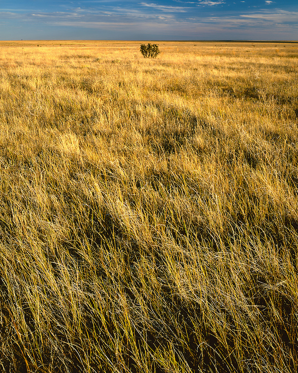 Sunset light on the Pawnee Grassland; Pawnee National Grassland, CO