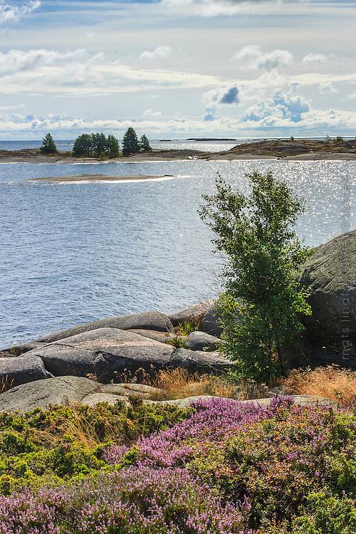 Hallskär med havet utanför i Stockholms skärgård/ Stockholm archipelago Sweden
