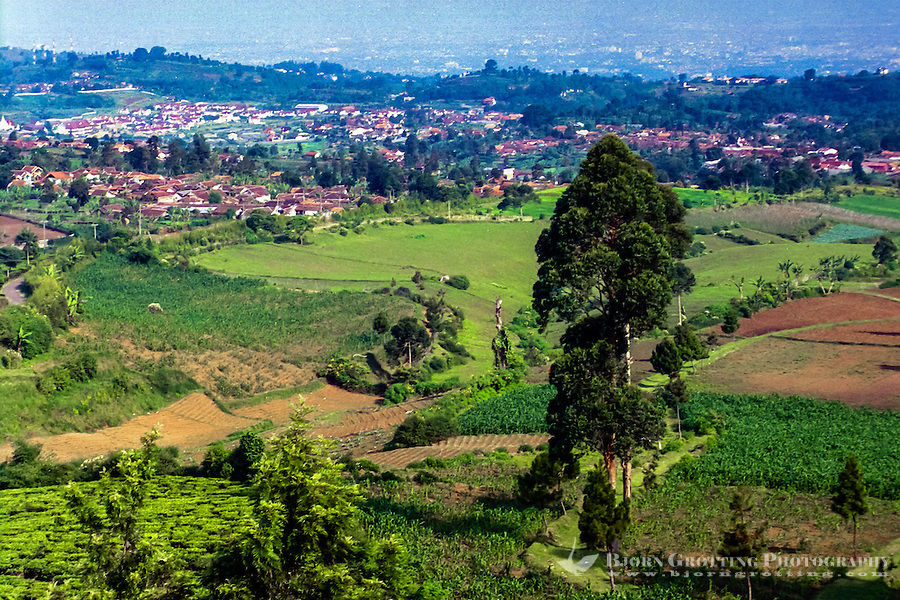 Indonesia, Java, Cisarua. Landscape in the hills above Bandung.