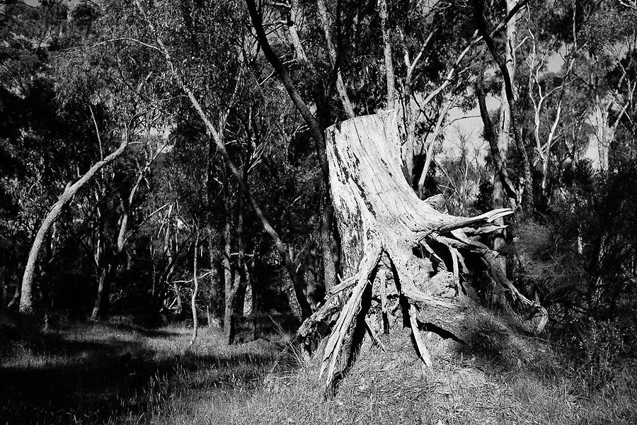 Image Ref: CA734<br /> Location: Castlemaine Heritage Area, Victoria<br /> Date of Shot: 11.11.18