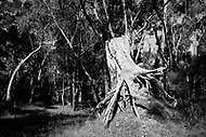 Image Ref: CA734<br />