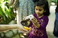 "A child from the Goddard Riverside Head Start Program photographs an owl butterfly (caligo eurilochus) in ""The Butterfly Conservatory:  Tropical Butterflies Alive in Winter"" at the American Museum of Natural History in New York on Thursday, October 6, 2011.  500 butterflies hover above the visitors in the 1200 square foot  vivarium where children and adults can observe and play amongst the flying beauties.  (© Frances M. Roberts)"