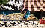 Woman drying fish Mirissa, Sri Lanka, Asia