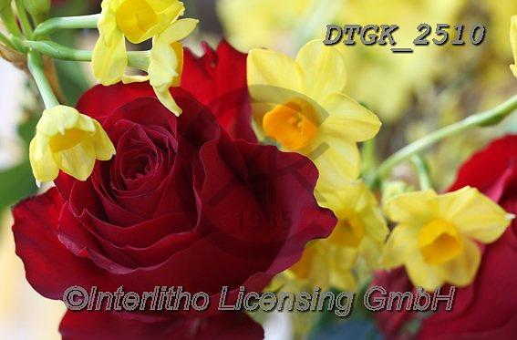 Gisela, FLOWERS, BLUMEN, FLORES, photos+++++,DTGK2510,#f#, EVERYDAY