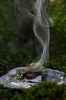 Räuchern in freier Natur, Räuchern mit Wacholder, Fichtenharz und Räucherkohle, Räucherritual, Räuchern mit Kräutern, Kräuter verräuchern, Wildkräuter, Duftkräuter, Duft, Smoking with herbs, wild herbs, aromatic herbs, fumigate, cure, censer, incense burner, perfume burner. Gemeiner Wacholder, Heide-Wacholder, Heidewacholder, Juniperus communis, Common Juniper, Juniper, Le Genévrier commun, Genièvre, Peteron, Petrot. Fichtenharz, Fichten-Harz, Baumharz, Harz, liquid pitch, tree gum, galipot, gallipot. Gewöhnliche Fichte, Rot-Fichte, Rotfichte, Picea abies, Common Spruce, Norway spruce, L'Épicéa, Épicéa commun