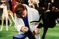 At the 129th annual Westminster Kennel Club Dog Show, held at Madison Square Garden in New York City on February 15, 2005.  <br /> <br /> The Westminster Kennel Club Dog Show is considered to be the most prestigious dog show in the world, a two day event comprising competitions in all 179 breeds of dog recognized by the American Kennel Club.  It is also the second oldest continuously run sporting event in the United States (after the Kentucky Derby), having taken place annually since 1875.  <br /> <br /> The competition is a conformation dog show, meaning that the dogs are judged by how close they match the published ideal standards for their particular breed.  More uncommonly the competition is &quot;benched&quot;, meaning that the dogs are required to be in assigned areas (or benches) while not being judged, allowing them to interact with fans and other breeders.  Dogs are therefore under constant scrutiny throughout the whole process, as are the other species in the competition, namely the owners, handlers, and breeders of these animals.
