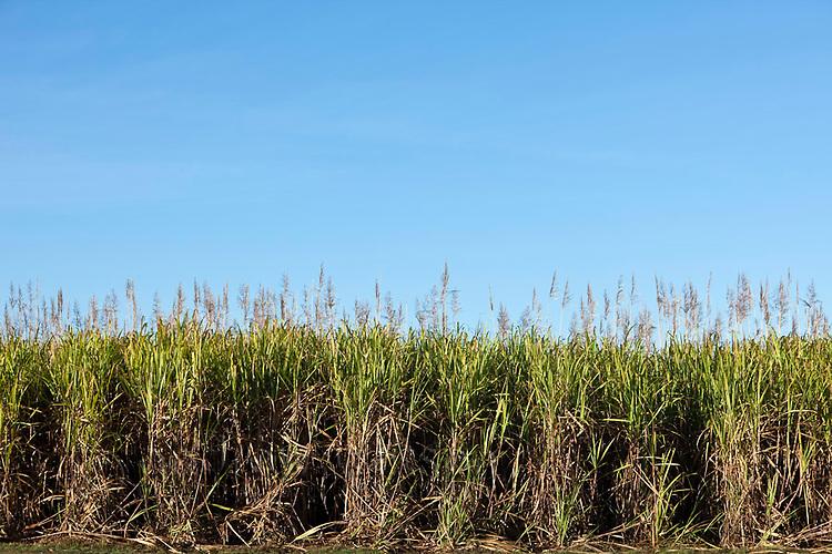 Sugar cane field near Cairns, Queensland, Australia