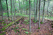 The Dr. Harris Place home site cellar hole along Sandwich Notch Road in Sandwich, New Hampshire USA. During the early nineteenth century, thirty to forty families lived (hill farm community) in the Notch. By 1860 only eight families lived in the Notch and by the turn of the twentieth century only one person, Moses Hall, lived in the Notch year around. Now a private residence the Hall Place is the only house left on the Notch Road.