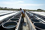 Grainocéan est une société d'écloserie d'huitres privée installé sur l'île de Ré. Elle fournit des naissaims aux Ostréiculteurs français.