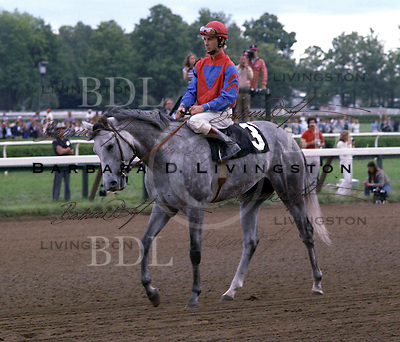 Runaway Groom, by Blushing Groom, before his surprise win in the 1982 Travers Stakes.  Jeff Fell up.
