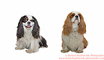 Partners Pets Portrait Shoot  26th April 2015