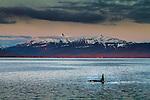 Killer Whale, Seymour Canal, Alaska