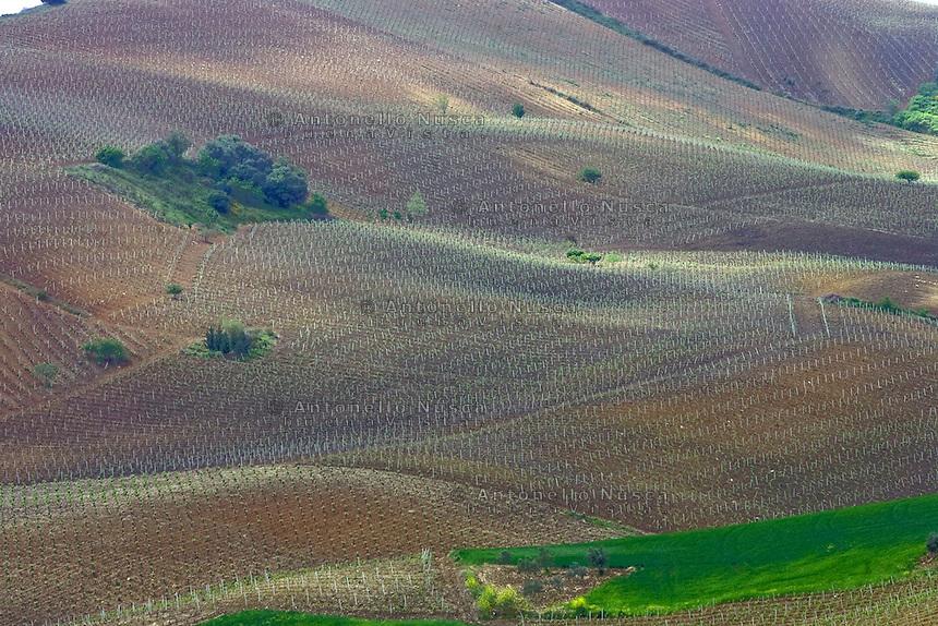 San Giuseppe Iato, 2006. Campagna siciliana