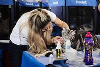 SAO PAULO, SP, 15 de junho 2013-Neste fim de semana dos dias 15 e 16 de junho, sábado e domingo, acontece a Exposição Internacional de Gatos de Raça do Clube Brasileiro do Gato. O evento começa às 10h e termina às 17h em ambos os dias, e tem a entrada gratuita para visitante.A Sociedade Hispano Brasileira, no bairro do Ipiranga, sedia o evento, que apresenta o número recorde de 300 felinos. A última edição, em março, contou com 250 gatos de 20 diferentes raças, além de aproximadamente mil visitantes.ADRIANO LIMA / BRAZIL PHOTO PRESS).