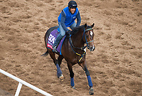 DEL MAR, CA - NOVEMBER 02: Imperial Hint, owned by Raymond Mamone and trained by Luis Carvajal Jr., exercises in preparation for TwinSpires Breeders' Cup Sprint at Del Mar Thoroughbred Club on November 2, 2017 in Del Mar, California. (Photo by Michael McInally/Eclipse Sportswire/Breeders Cup)
