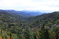 Stock photo: A valley of the great smoky mountain national park filled with pine trees and surrounded by mighty hills.