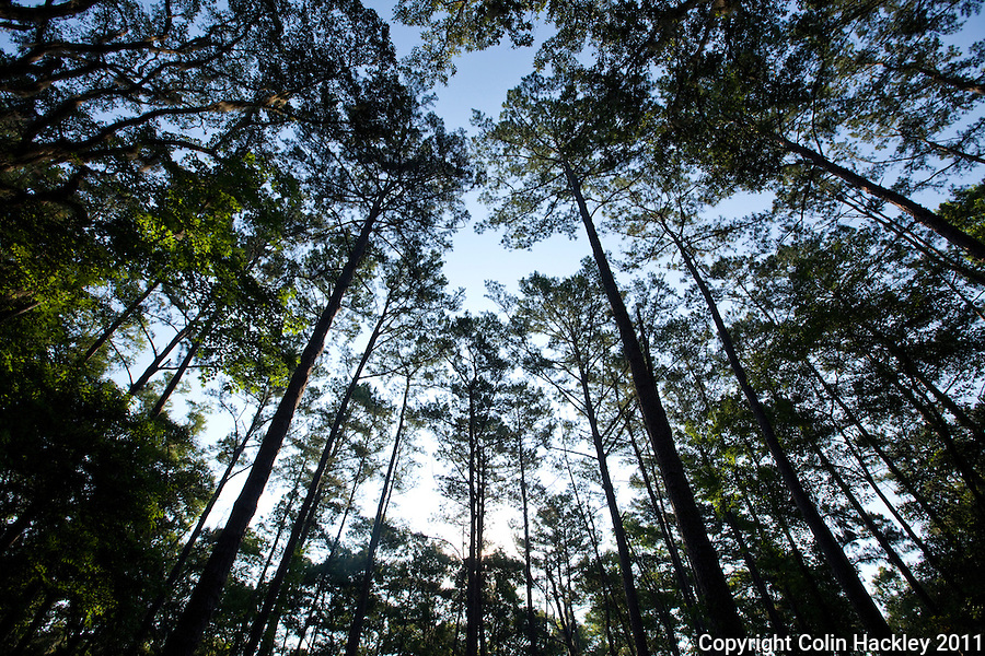 ELINOR KLAPP-PHIPPS PARK: Most of the 500-acre park is covered by mature timber..COLIN HACKLEY PHOTO