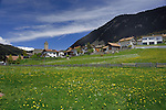 Cows in spring meadows with the background of village and church. Resia / Reschen town. Austrian/ Italian border, Tyrol. Tirol.