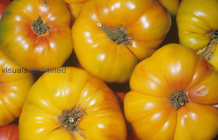 Tomato variety Striped Marvel (Solanum lycopersicum)