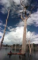 """Mateiros de canoa escolhem a madeira e serram as copas das ·rvores para depois mergulhadores cortarem os troncos do lago que se formou apÛs a construÁ""""o da represa.<br /> TucuruÌ - Par· - Brasil<br /> 26/04/2000. <br /> Negativo Cor 135 N∫ 5455 T1 F9<br /> ©FOTO: PAULO SANTOS/INTERFOTO"""