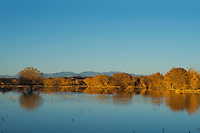 Fall Reflection, Bosque del Apache NWR