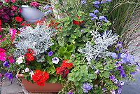 Container garden of annual flowers and foliage, red bloomed Geranium Pelargonium, Senecio Dusty Miller, Petunia, annual vinca, ageratum in pot planter in red, white, blues colors