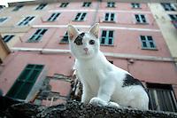 Un gatto a Vernazza, uno dei borghi delle Cinque Terre.<br /> A cat in Vernazza, at the Cinque Terre.<br /> UPDATE IMAGES PRESS/Riccardo De Luca