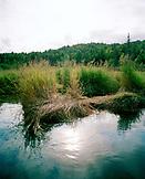 USA, Alaska, Redoubt Bay, a bear trail along Big River in Redouby Bay, Redoubt Bay Lodge
