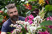 "London, UK. 5 February 2015. Kew Gardens horticulturalist Henck Roling prepares a floral display. ""Alluring Orchids"" is the first festival on the Royal Botanic Gardens' 2015 calendar which showcases thousands of exotic and rare flowers in the Princess of Wales Conservatory from 7 February to 8 March 2015."