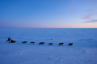 Ken Anderson runs on the trail just outside Nome as the sun has set over the Bering Sea during the 2010 Iditarod