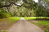 A wonderful view of the long trail path of brookgreen garden, a national historic landmark. As the name of the garden its with eycatching green view everywhere.