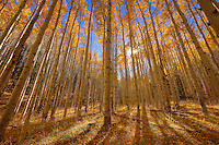 Lockett Meadow - Arizona