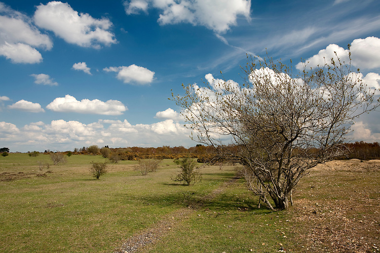 Spring on Greenham Common, near Newbury, Berkshire, Uk