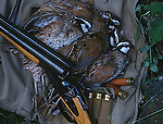 Bobwhite quail game birds with classic side by side sporting shotgun