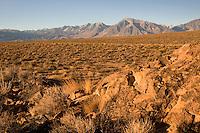 High Desert volcanic tablelands, Bishop, CA
