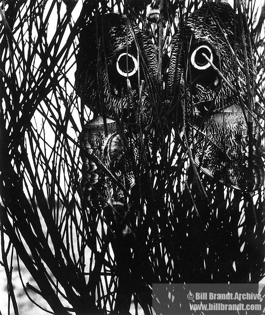 Caligo, 1963