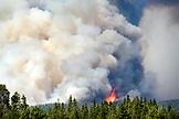 USA, Wyoming, forest fire, Fishing Bridge, Yellowstone National Park